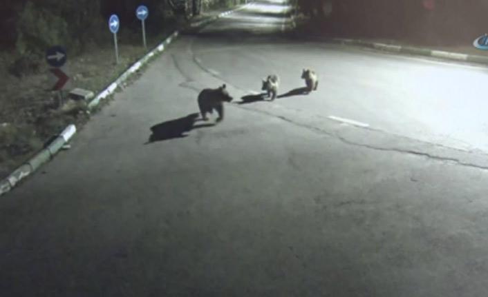 Aç kalan ayılar şehre indi