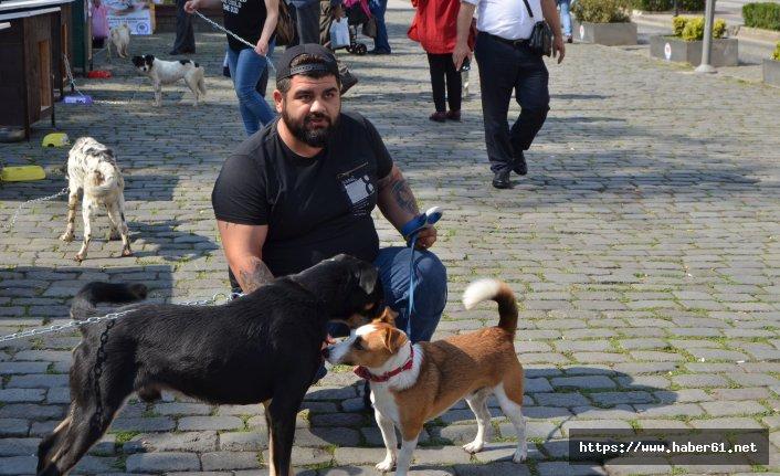 Trabzon'da Hayvanları koruma günü etkinliği