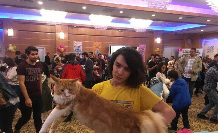 Kediler güzellik yarışmasında birinci olmak için yarıştı