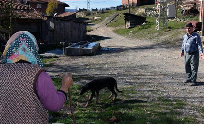 Köye dadanan köpekler korku salıyor