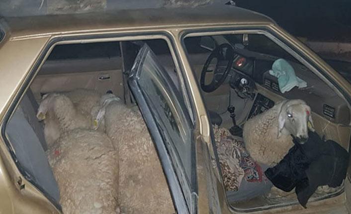 Çaldığı koyunlar otomobilde bulundu