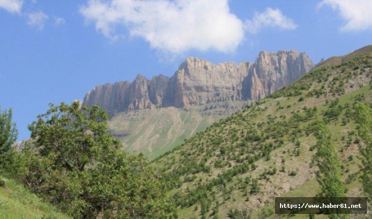 Kato Dağı'nda aç kalan ayı bakın ne yaptı?