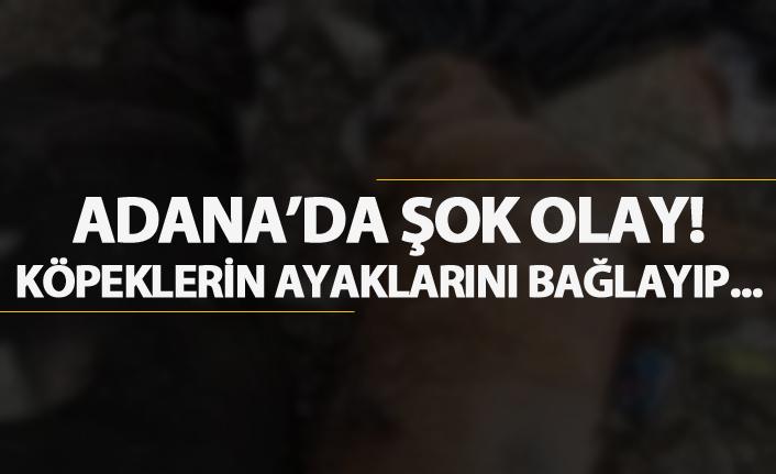 Adana'da şok olay! Köpeklerin ayaklarını bağlayıp...