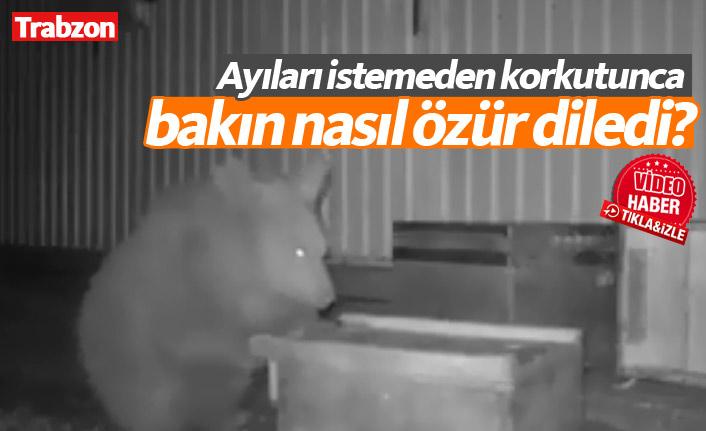 Trabzon'da istemeden korkuttuğu ayılara ikramda bulundu