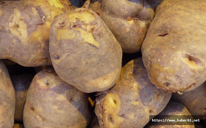 Patates üretim takvimi açıklandı