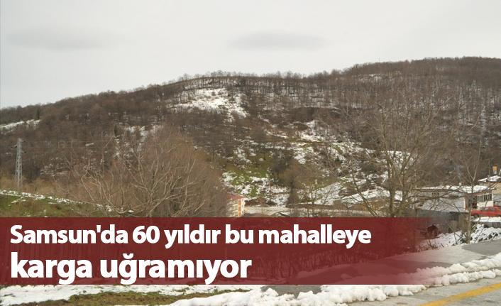 Samsun'da 60 yıldır bu mahalleye karga uğramıyor