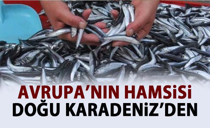 Doğu Karadeniz'den Avrupa'ya Hamsi ihracaatı!