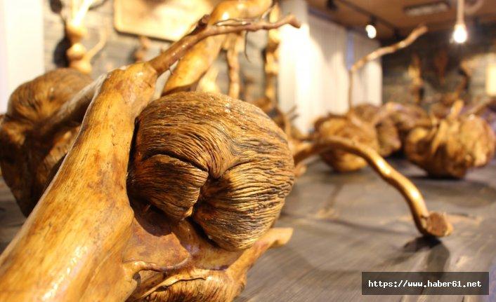 Ağaçların 'Yeraltı dünyası' müze oldu