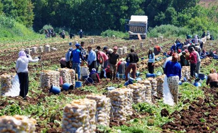 Tarım işçilerin ücreti arttı
