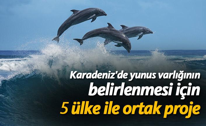 Karadeniz'de yunus varlığının belirlenmesi için 5 ülke ile ortak proje