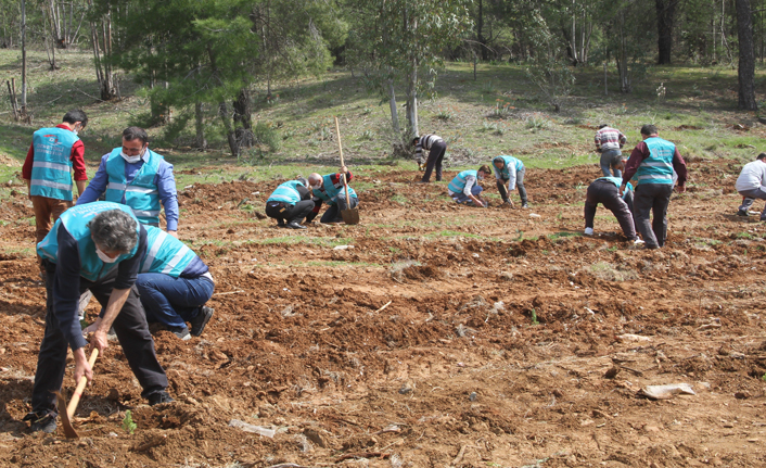 Adalet ormanı için 600 fidan dikildi