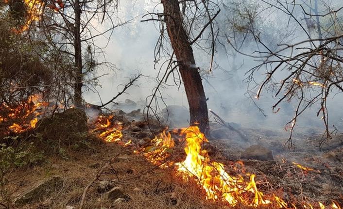 Karabük'teki orman yangınına gözaltı