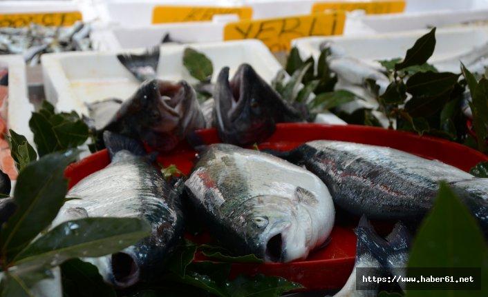 Balık avında son 10 gün