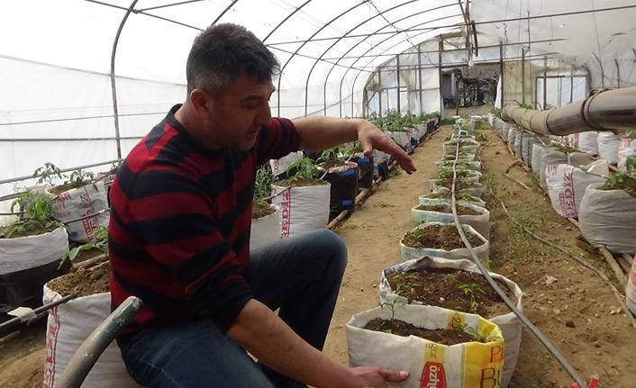 Yarasa gübresi kullanarak üretim yapıyor
