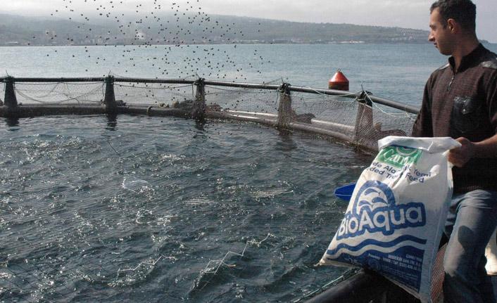 Türkiye'de avlanan balık miktarı azaldı