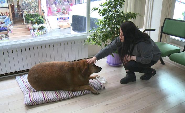 Rize'de bu köpek noter huzurunda yaşıyor