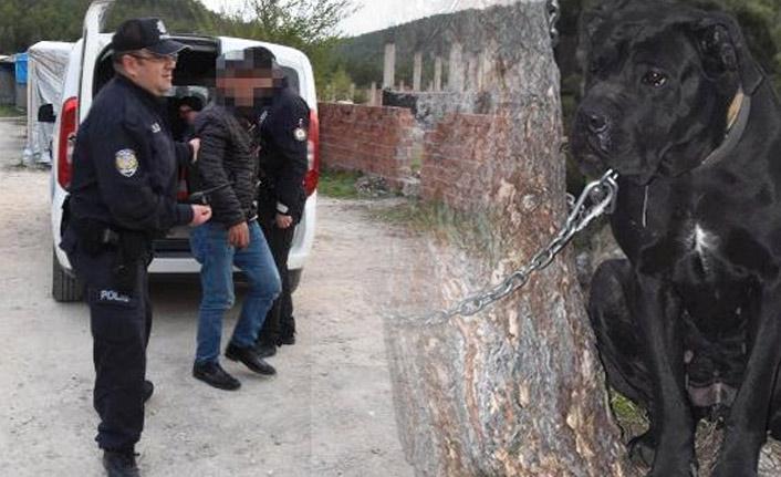 İki kişi köpeğe tecavüz etti!