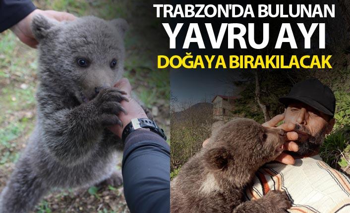 Trabzon'da bulunan Yavru ayı doğaya bırakılacak