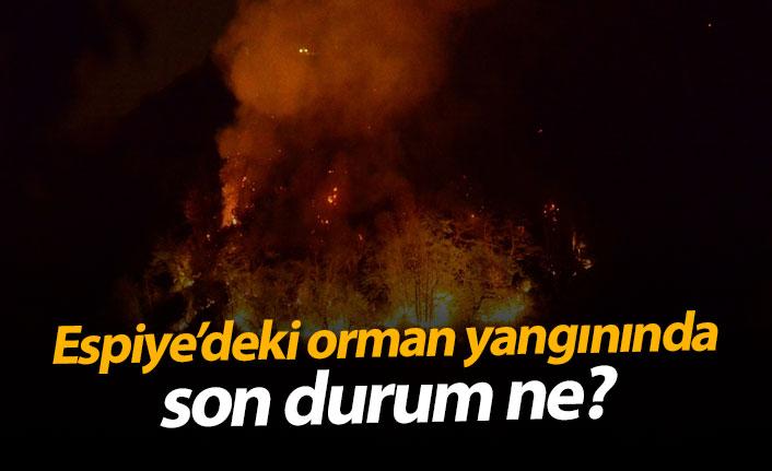 Espiye'deki orman yangınında son durum ne?