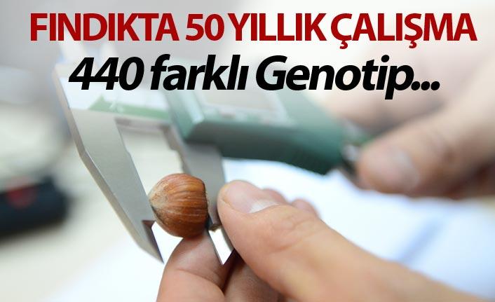 Fındık üzerinde 50 yıllık çalışma - 440 farklı Genotip...