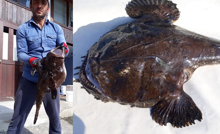 Karadeniz'de ender görülen balık balıkçıları da şaşırttı