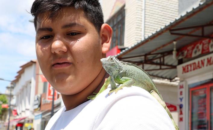 İguanayı papağan gibi omzunda gezdiriyor