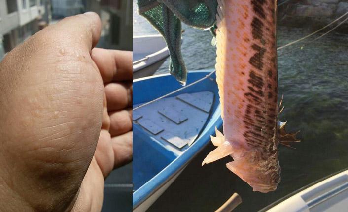 Olta balıkçıları dikkat