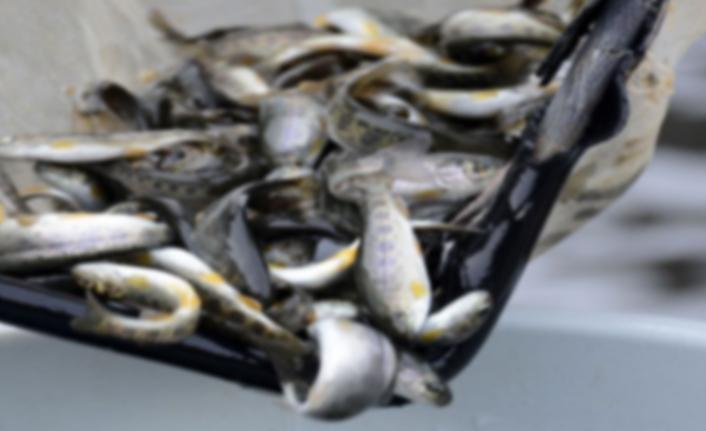Avrupa standardında balık üretimiyle ekonomiye katkı