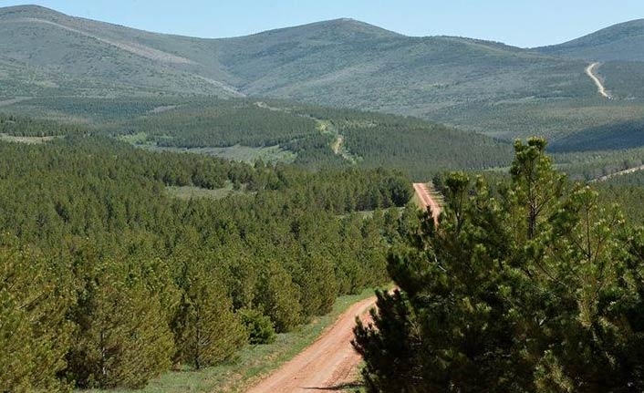 Türkiye ağaçlandırmada dünya üçüncüsü