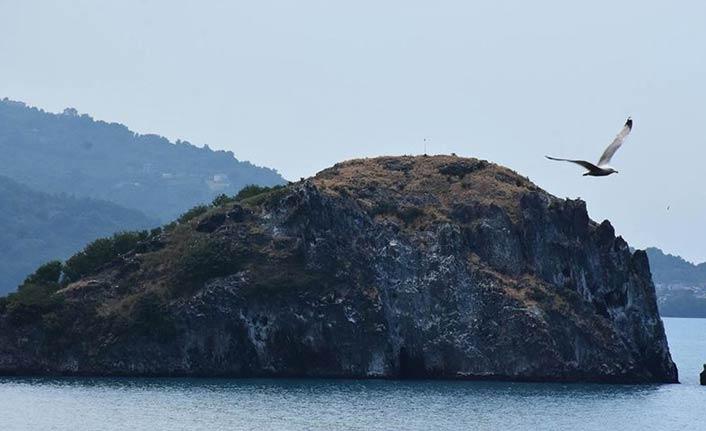 'Sakin şehrin' adası kuşlarıyla ilgi çekiyor