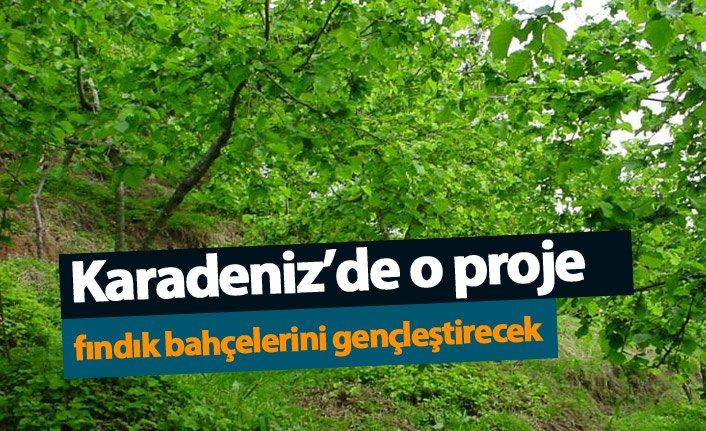 Karadeniz'de o proje fındık bahçelerini gençleştirecek