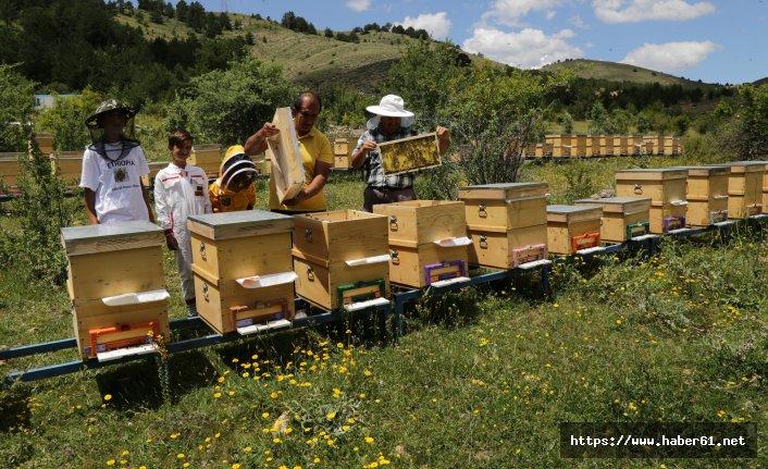 Gümüşhane'de Kafkas Ana Arı üretimi başladı