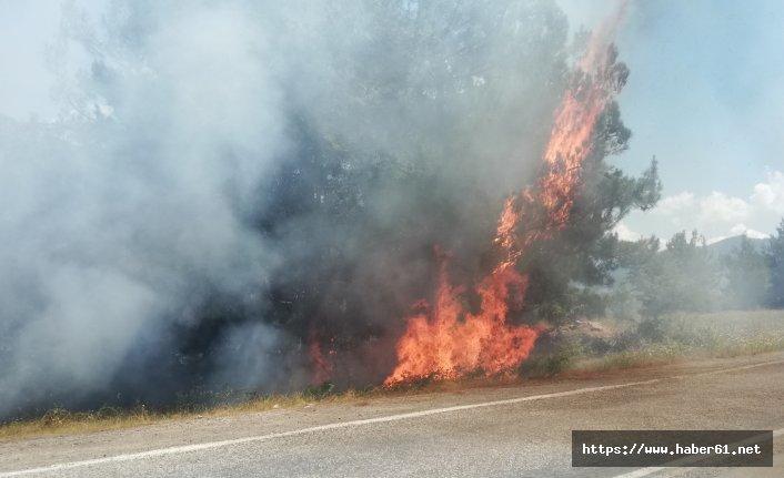 Piknikçiler orman yangını çıkardı