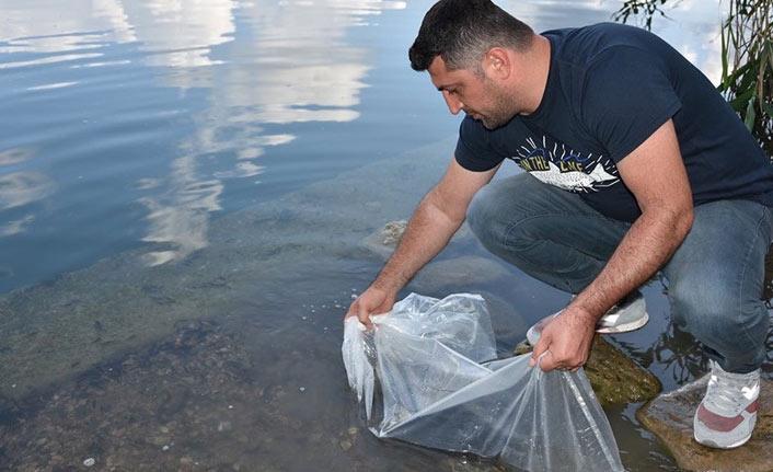 30 bin sazan yavrusu Gaga Gölü'ne bırakıldı