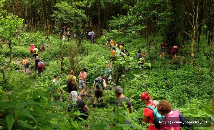 Ormanlardaki yosunları böyle dikkat çektiler