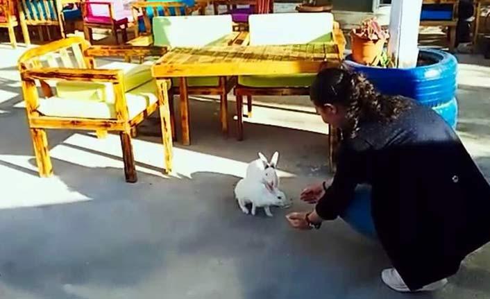 Dondurma yiyen tavşanlar herkesi gülümsetti