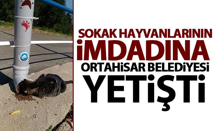 Trabzon'da Sokak hayvanları için suluk ve yemlik