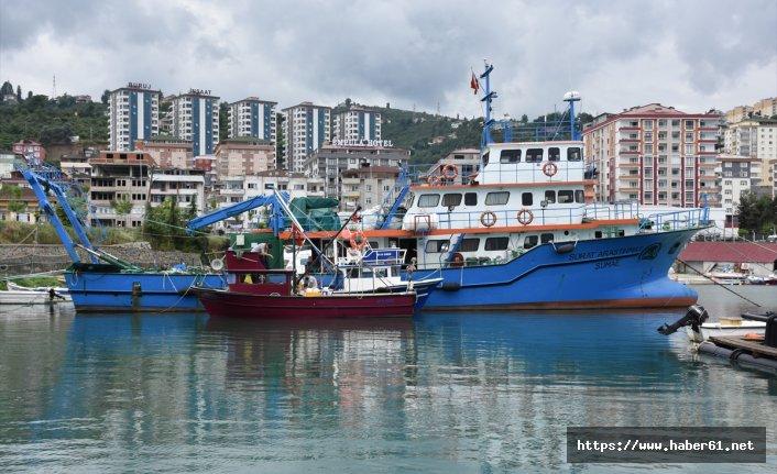 Karadeniz'deki deniz salyangozu bilim insanlarının radarında