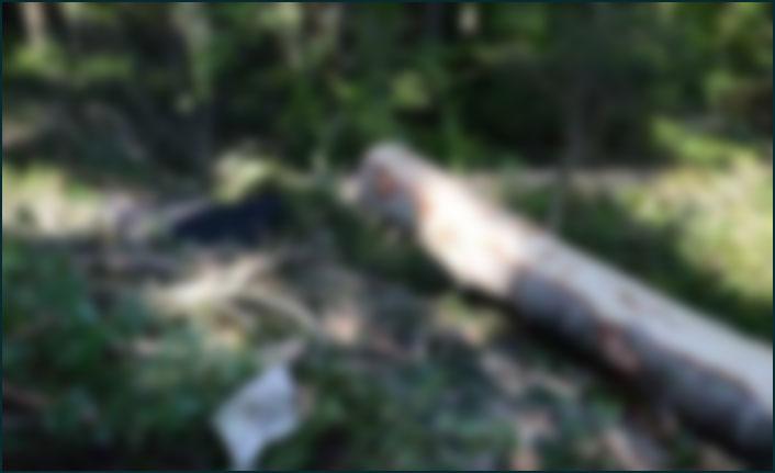 Araklı'da acı ölüm! Kestiği ağacın altında kaldı!