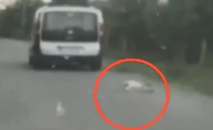 Arabasına bağladığı köpeği sürükledi, kendisini böyle savundu