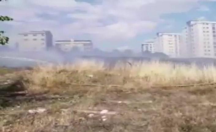 Otluk alanda yangın: 4 köpek telef oldu