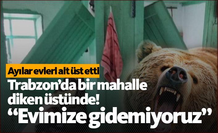 Trabzon'da korkutan ayı saldırısı