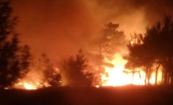 10 hektarlık ormanlık alan yandı