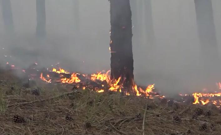 Sinop'ta orman yangını korkuttu