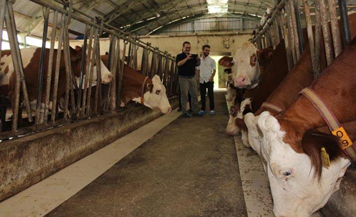 Trabzon'da AB destekli dev tesis