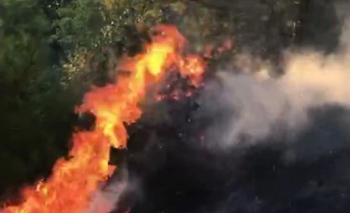 Hatay'da orman yangın korkuttu!