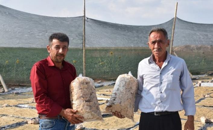 Anadolu'nun meşhur tarhanasından cips