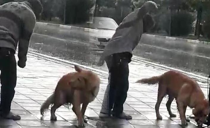Sağanak yağmurda köpeği yumrukladı