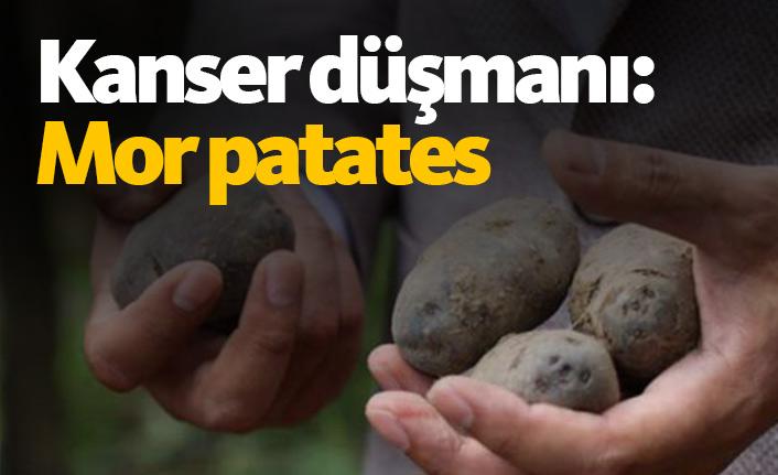 Kanser düşmanı: Mor patates
