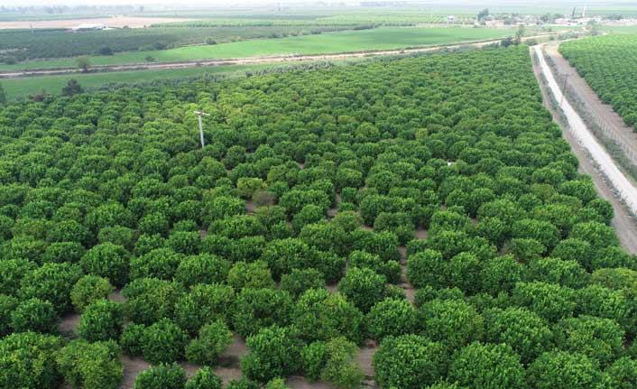 TARSİM' den çiftçilere 5,4 milyar TL ödeme